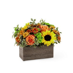 The FTD Happy Harvest Garden From Rogue River Florist, Grant's Pass Flower Delivery