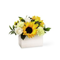 The FTD Sweet as Lemonade Bouquet From Rogue River Florist, Grant's Pass Flower Delivery