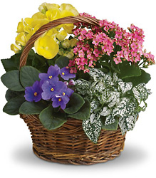 Spring Has Sprung Mixed Basket From Rogue River Florist, Grant's Pass Flower Delivery